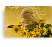 Bunny And Daisies  Canvas Print