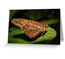 Gorgeous wings Greeting Card