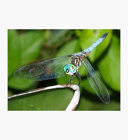 Blue dragonfly with aqua eyes Photographic Print
