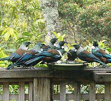 Tui's - Feeding Frenzy.........! by Roy  Massicks