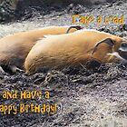 Happy Birthday Card 6 by cardsforyou