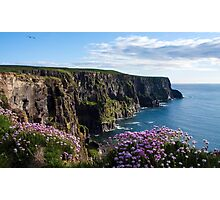 Sea Pink On The Cliffs Photographic Print