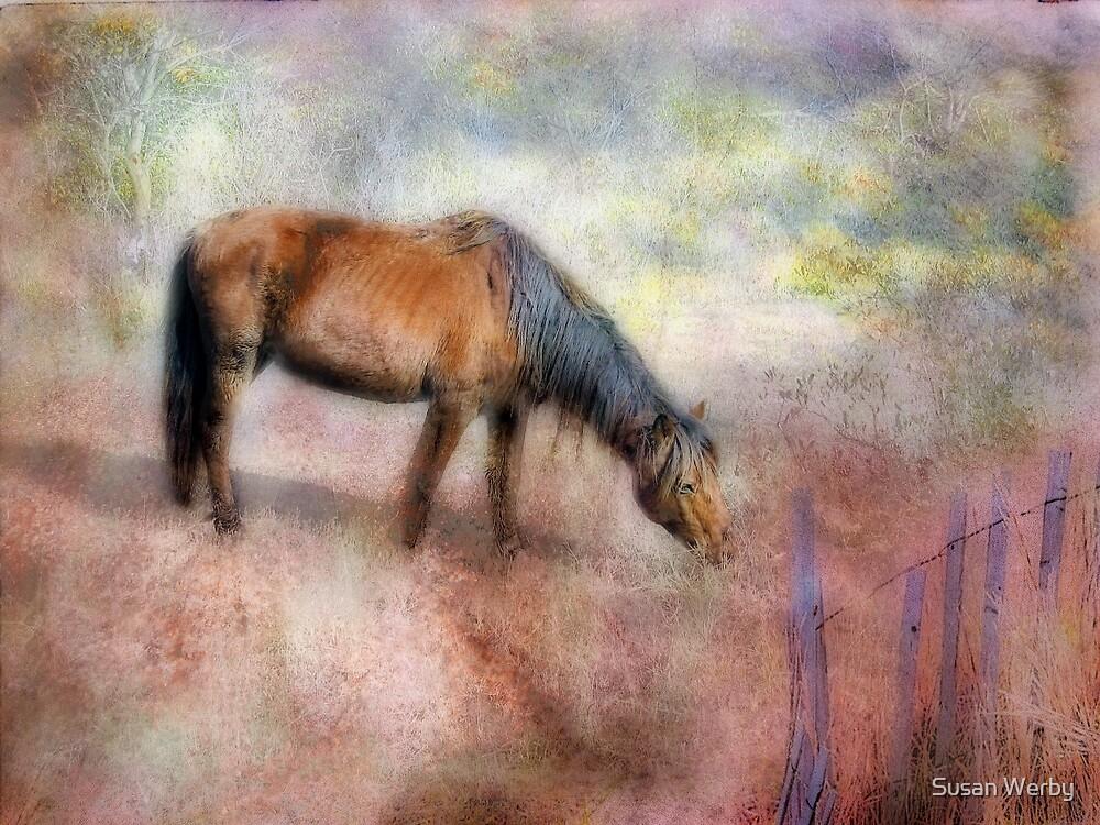 Fairy Tale Dreams by Susan Werby