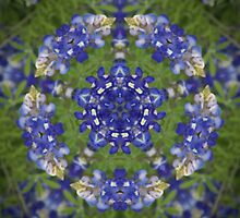 Bluebonnet Reflections by Eggtooth