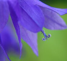 Trumpeting the Blues by Kathy Reid