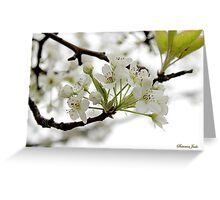 White on White ~ in Morning Rain Greeting Card