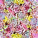 Succulent Pink by redqueenself