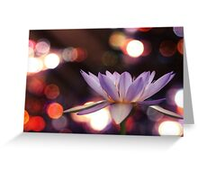 lily and light 2 Greeting Card