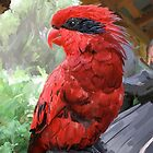 Blue-Streaked Lory by James Minson