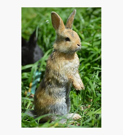 Cornellius the most entertaining bunny ever Photographic Print