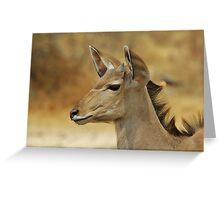 Kudu Bull Calf - Innocent Beauty Greeting Card