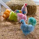 Rainbow Silkies by Sharon Brown