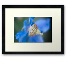 The Colour Blue - Himalayan Blue Poppy Framed Print