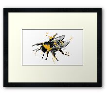 Bumble bee illustration in watercolour Framed Print
