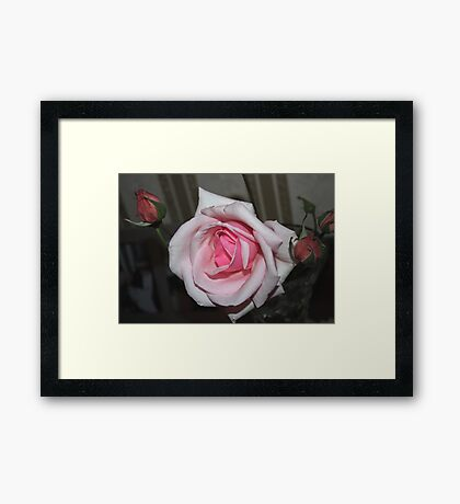 Really Pretty Pale Pink Rose Framed Print