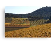 Golden Vines Canvas Print