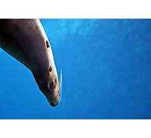 Cheeky Sea Lion Watercolor Photographic Print