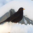 Blackbird by DES PALMER