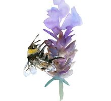Bee on lavender watercolor by Zendrawing