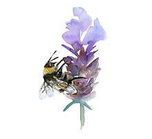 Bee on lavender watercolor Photographic Print