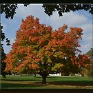 Fall Glory by Sheryl Gerhard