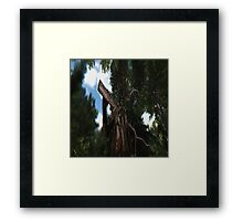 Groot's Big Brother Framed Print