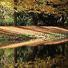 Reflection of Fall by Jo Nijenhuis