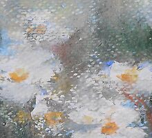 Daisies 2 by Jane See