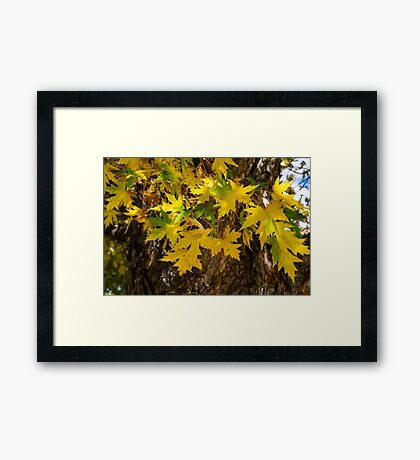 Oak Framed Print