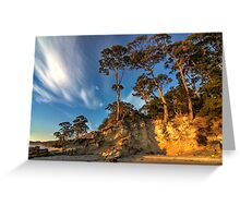 HDR Hanssons Beach trees - Bruny Island, Tasmania Greeting Card