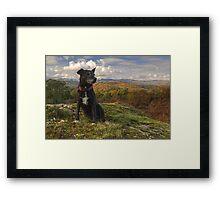 The Wistful Terrier Framed Print