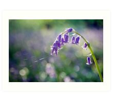 The Colour Blue - Bluebell Art Print