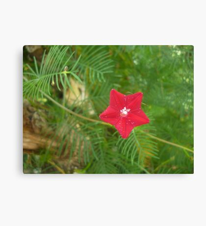 Star-like Red Flower Canvas Print