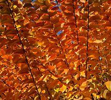 Orange Autumn Lines and Diagonals - the Burning Bush by Georgia Mizuleva