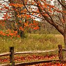 Autumn countryside... by Poete100