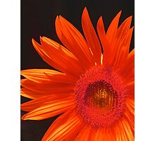 Sunset Sunflower Photographic Print