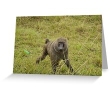 baboon in the african bush Greeting Card