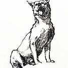 Dingo - ink drawing by Roz McQuillan