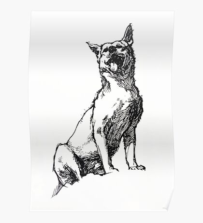 Dingo - ink drawing Poster