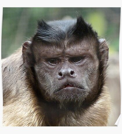 A Caring Capuchin Leader Poster