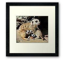 Baby Meerkats View The World Framed Print