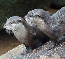 Otter Alert by Margaret Saheed