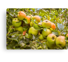 Little Green Apples Canvas Print