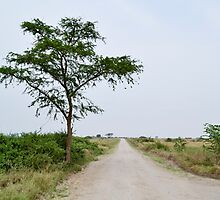 road in the African savanna by spetenfia