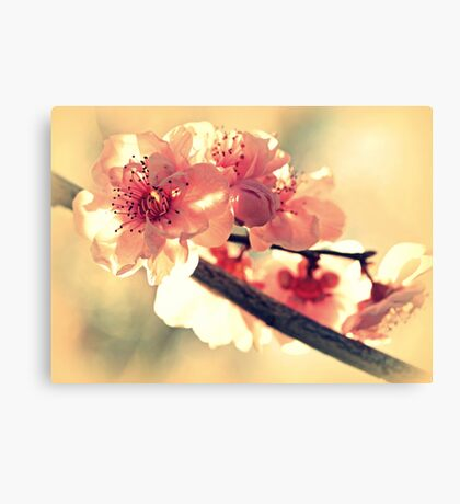 Spring of 2012 Canvas Print