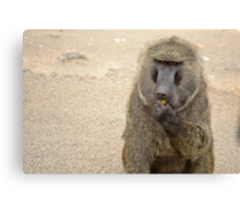 baboon in the african bush Canvas Print
