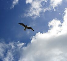 Seagull Flying Above by Circe Lucas