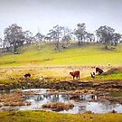 Rural Scene Country NSW by Ronald Rockman