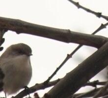 Bird and Branches Sticker