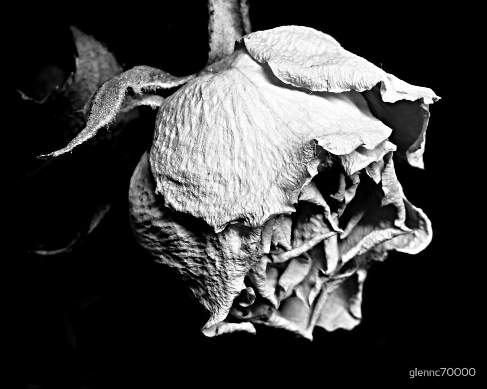 Passato il primo Rose by Glenn Cecero